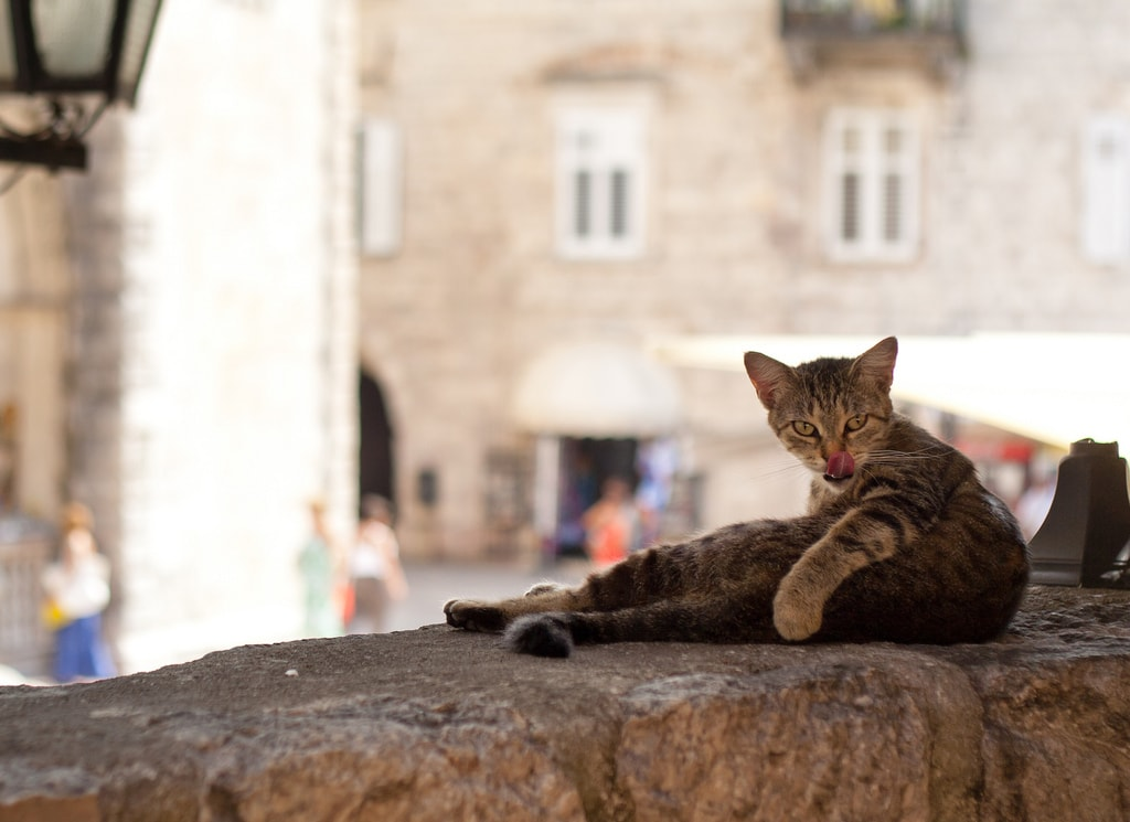 Kotor cat | © Alexandra Zakharova/Flickr