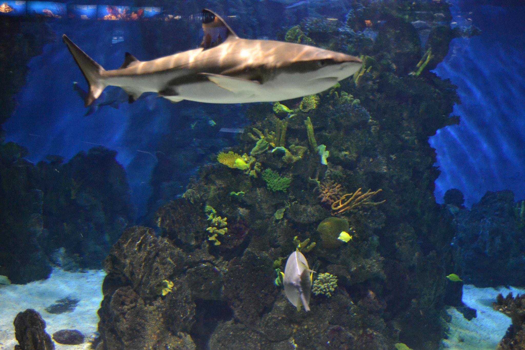 Discover the Barcelona aquarium © Emilio