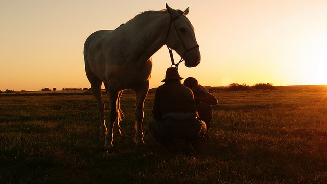 Uruguayan countryside with horses