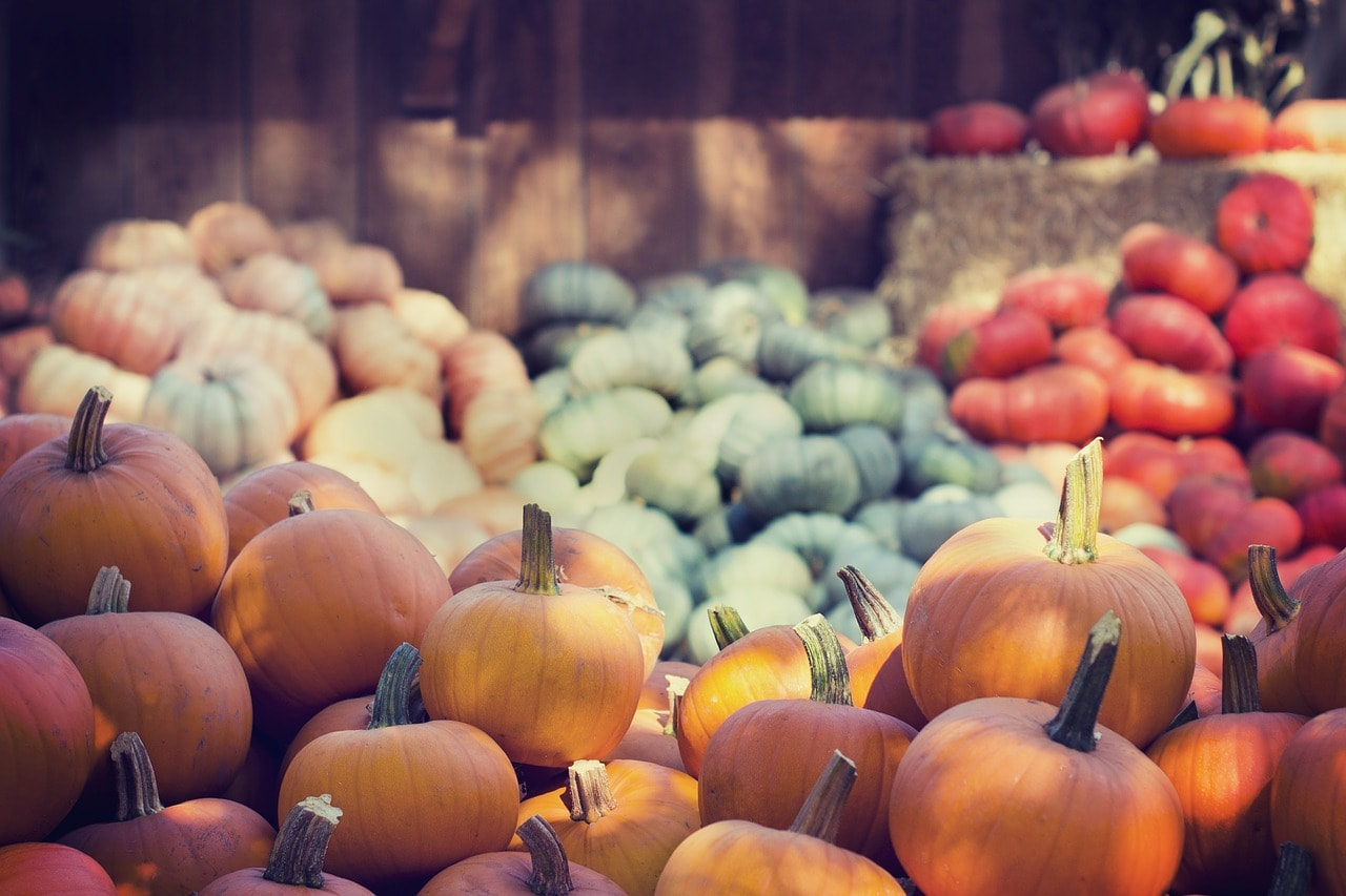 Varieties of pumpkin | © Pexels/Pixabay