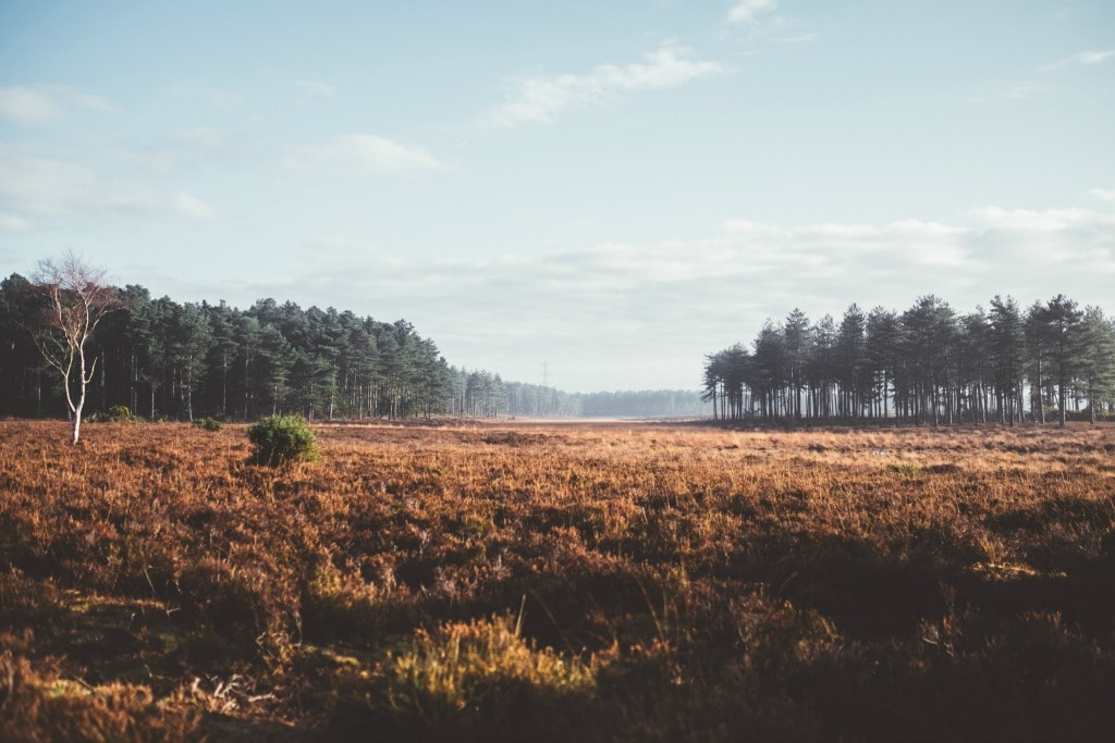 New Forest in Autumn