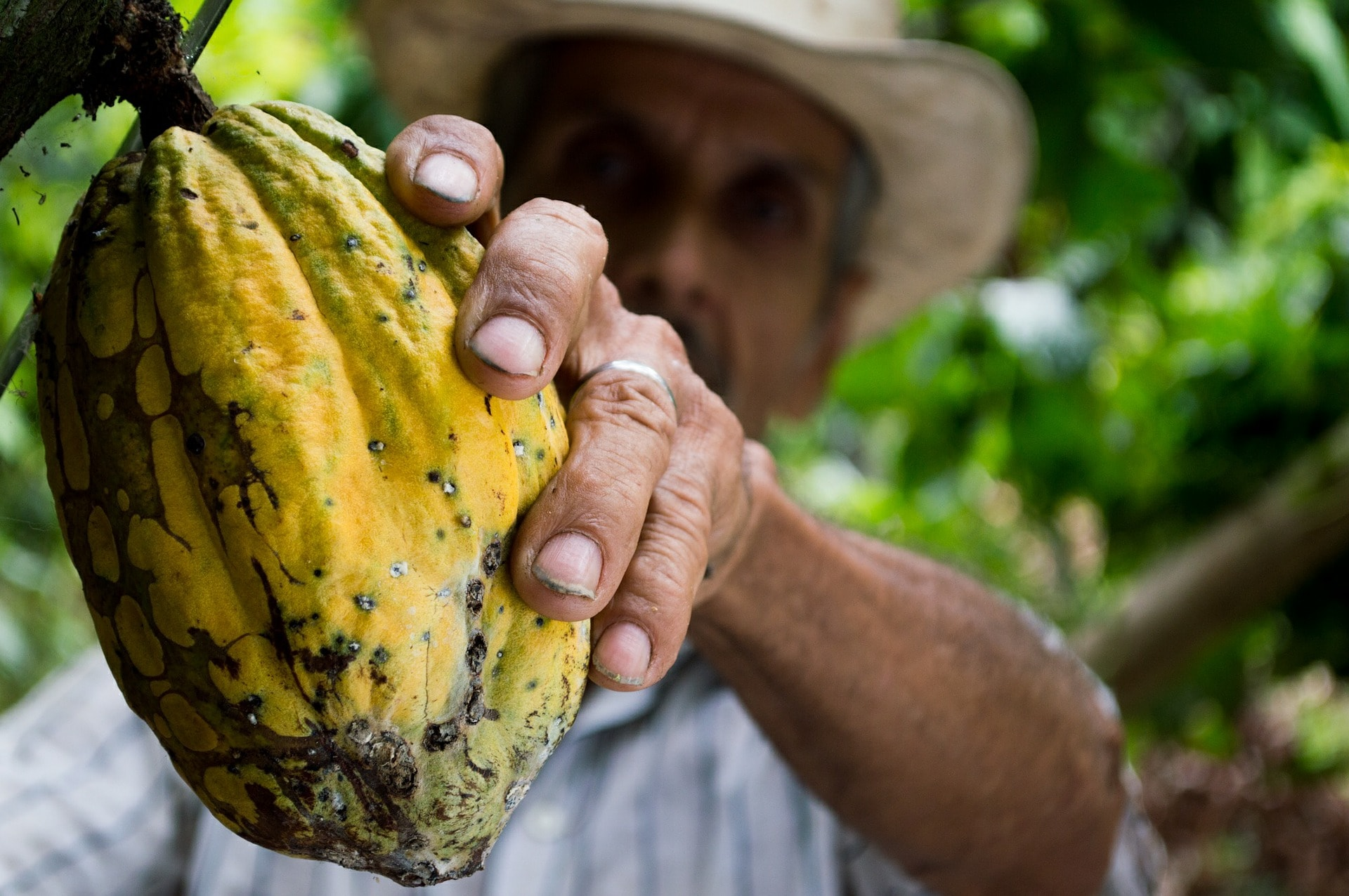 Colombia's Coffee Region | © Elias Shariff Falla Mardini/Pixabay