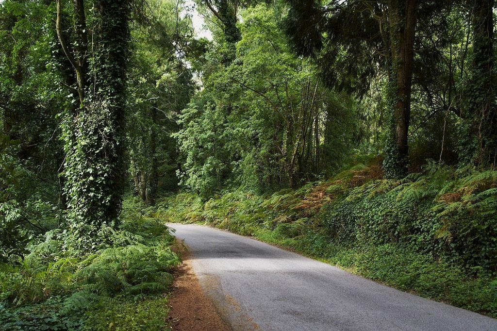 https://pixabay.com/es/forestales-naturaleza-portugal-2276999/