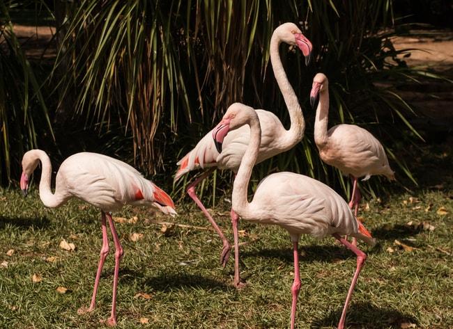 Pink Flamingos at Lagos Zoo | © Elenapavlova/Shutterstock