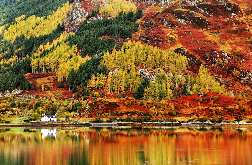 Autumn Colours In Highlands
