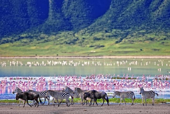 Wildlife in the Ngorongoro Crater   © Travel Stock/Shutterstock