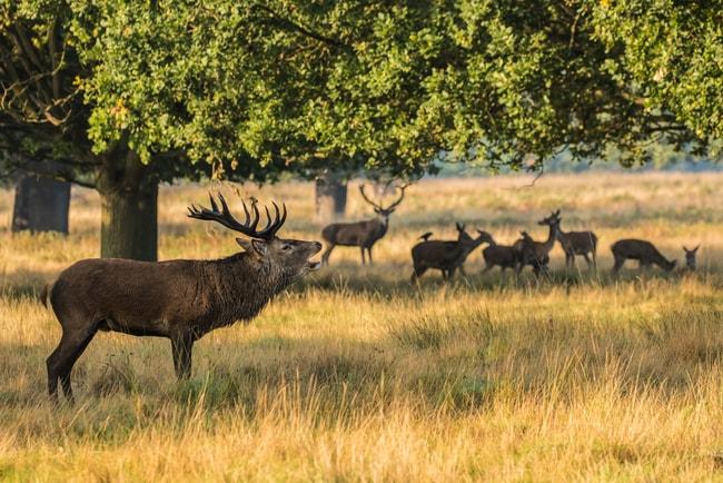 Red Deer Stag in Richmond Park | © Stephan Morris/Shutterstock