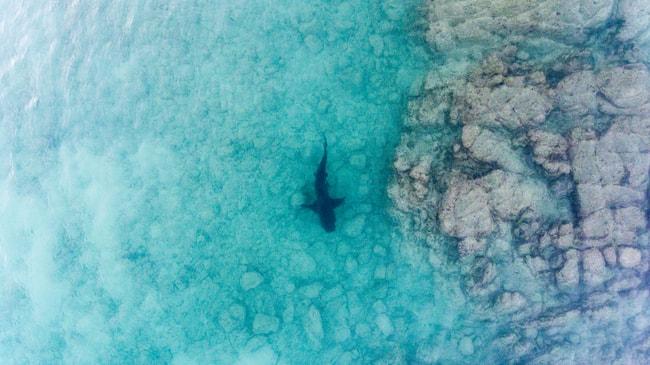 Bull Shark swimming in the Sea of Cortez, Mexico | © Leonardo Gonzalez/Shutterstock