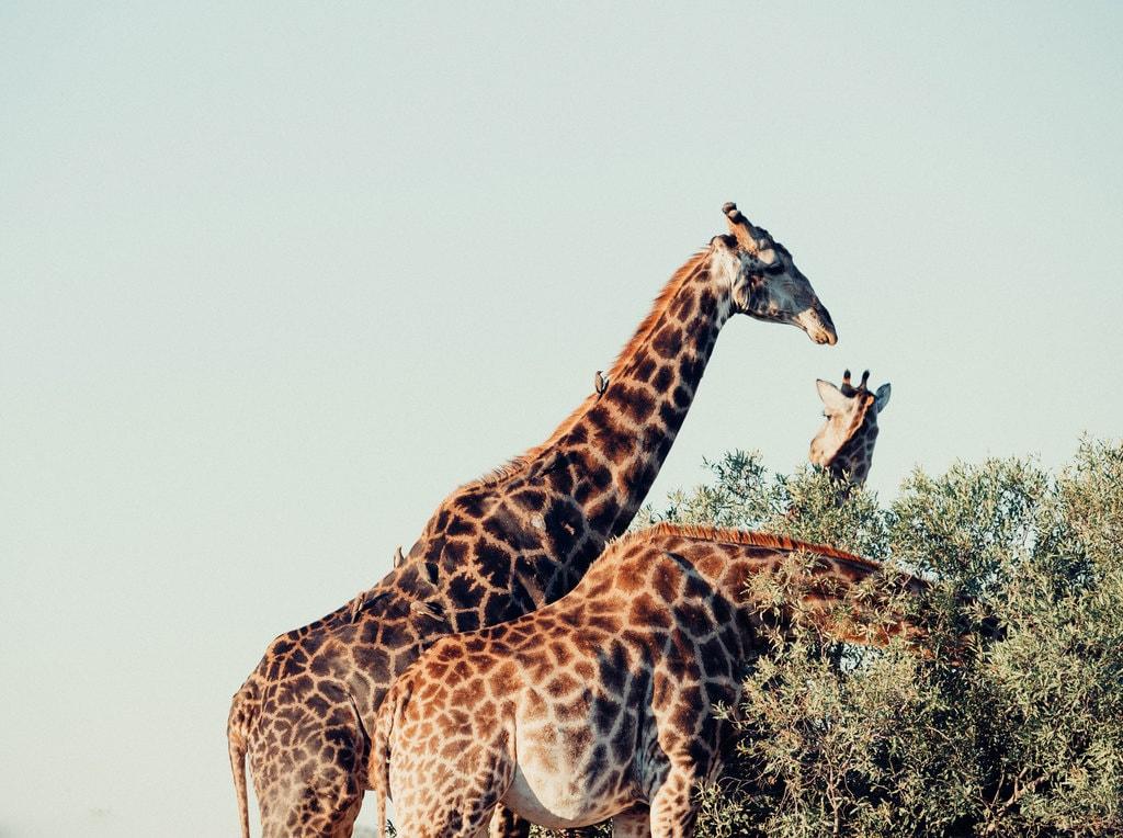 South-Africa-adventure_Kruger