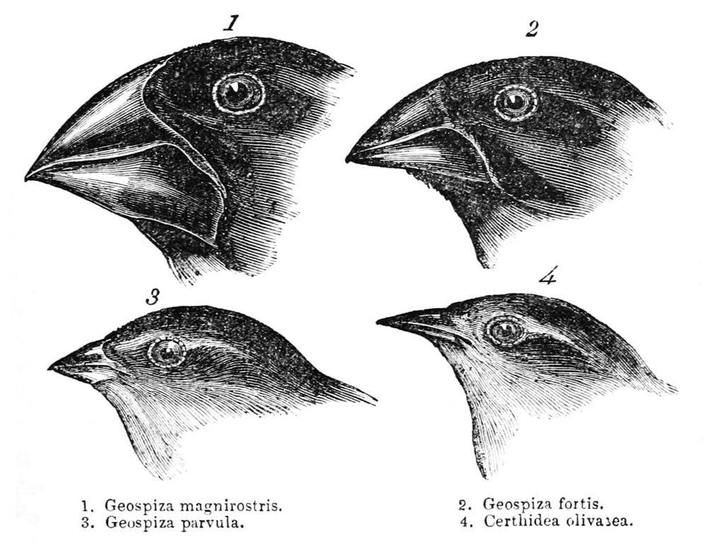 Darwin's finches   John Gould / Wikimedia Commons