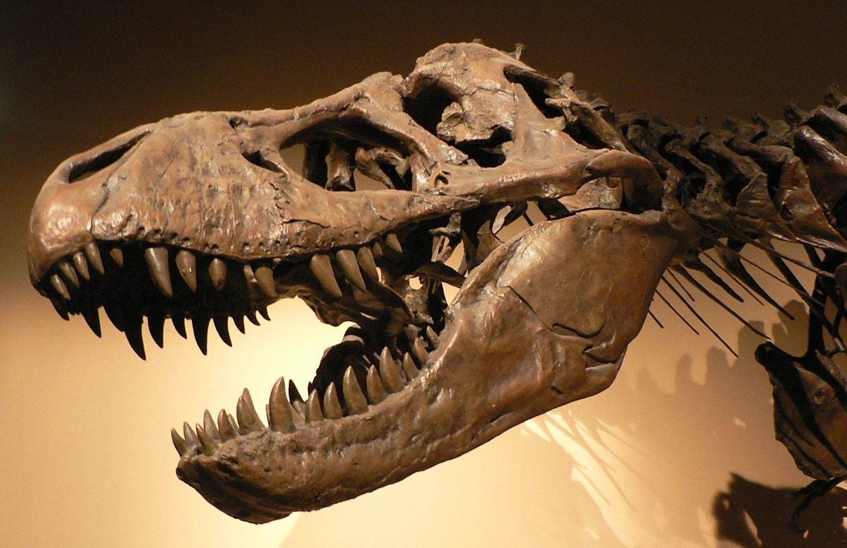 Tyrannosaurus Rex | ©David Monniaux / Wikimedia Commons