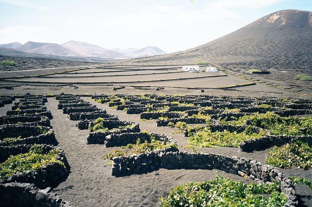 Vineyards in Lanzarote, Canary Islands | ©Andreas Tusche / Wikimedia Commons