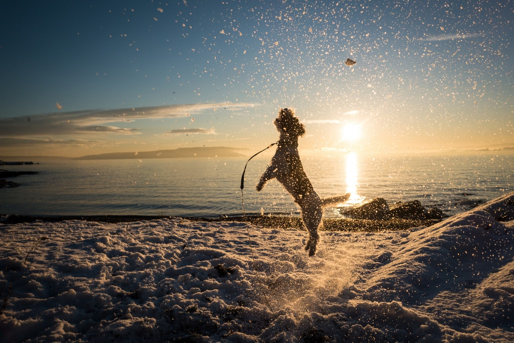 Dog playing in Paradisbukta beach | © Frode Ramone / Flickr