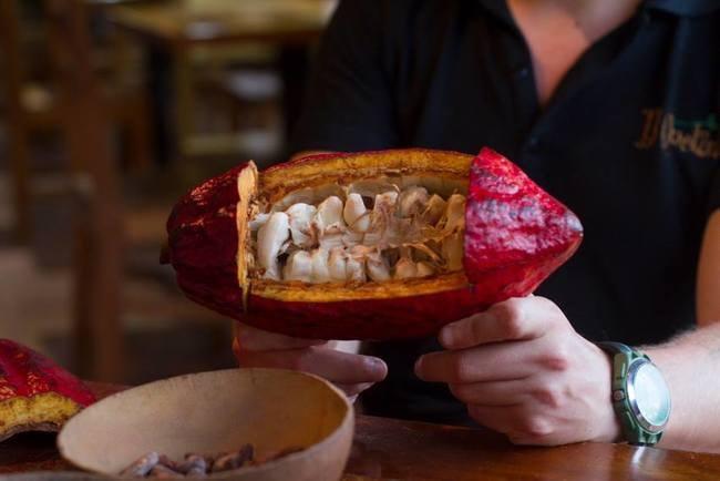 Cacao   © Vibeke Johannessen / Courtesy of The Viking Abroad