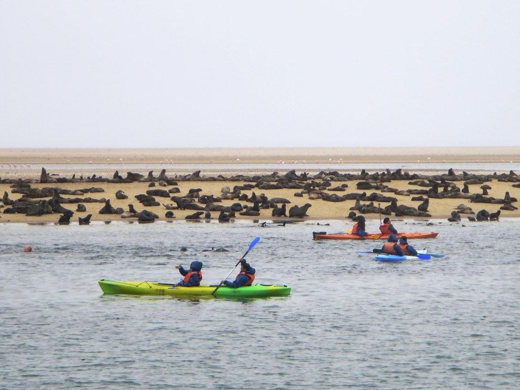 Kayaking at Pelican Point
