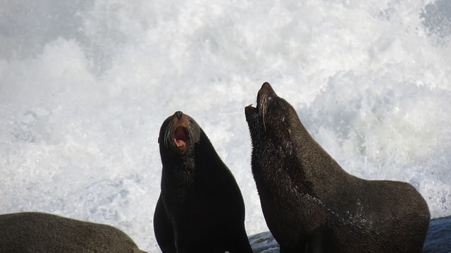 Watch sea lions up close in Cabo Polonio