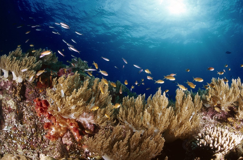 Indonesia Is The Ultimate Diving Paradise And Here S Why