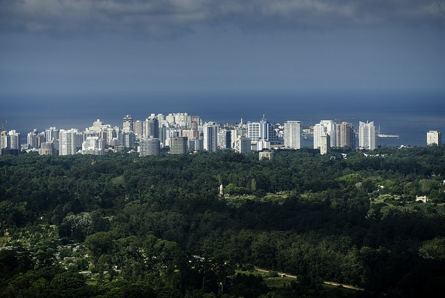Forest with a city view in San Rafael, Punta del Este, Uruguay