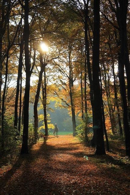 autumn-1249391_1280