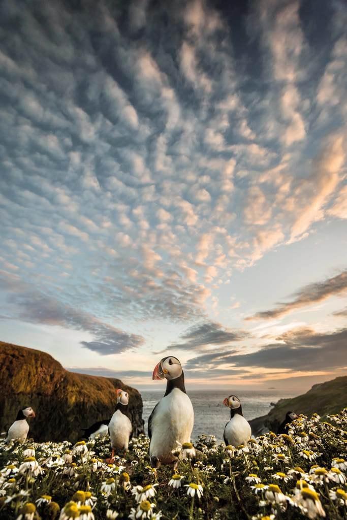 Matthew Cattell,Wildlife on Skomer | Courtesy of Landscape Photographer of the Year