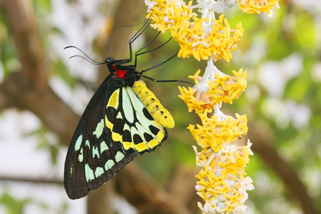 Courtesy of Butterfly World