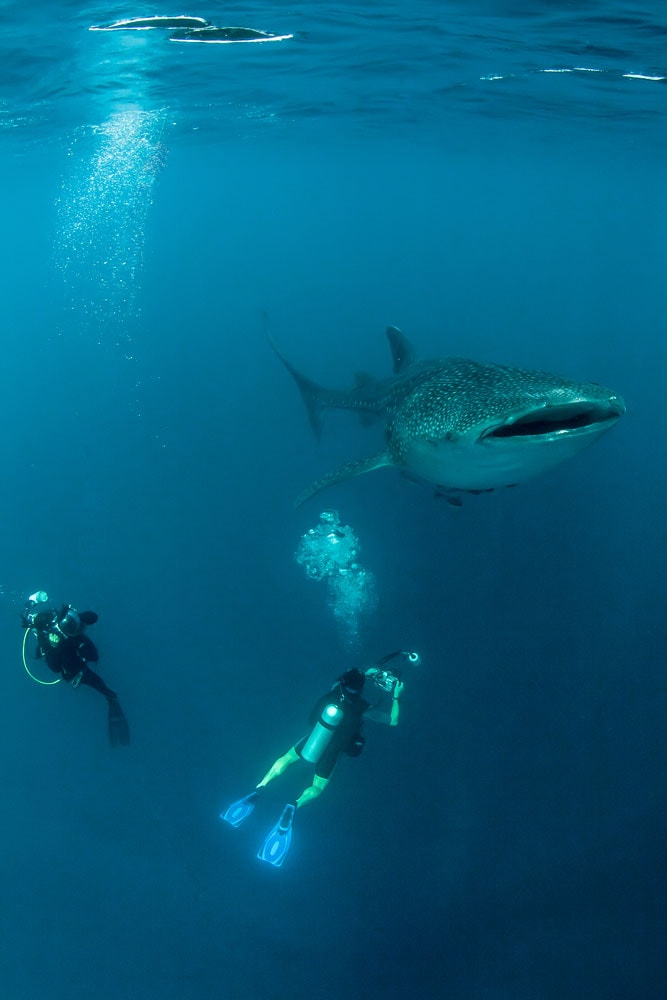Crazy-Things-You-Have-To-Do-in-Africa_Whale-sharks
