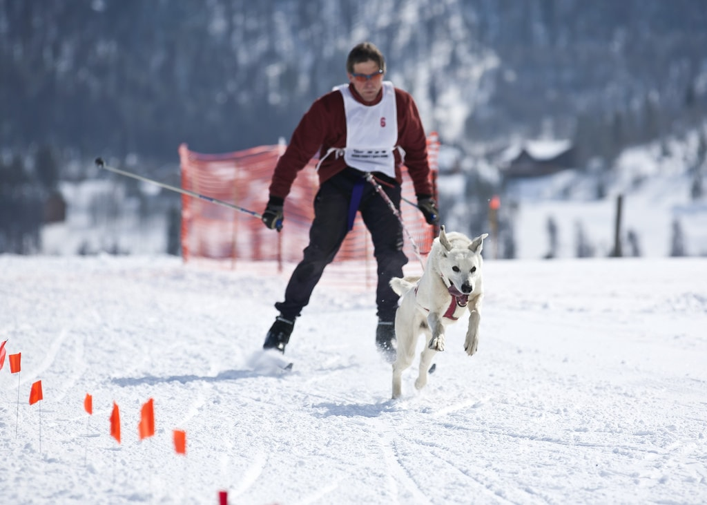 Dog Skijoring | © PhotoBobil / Flickr