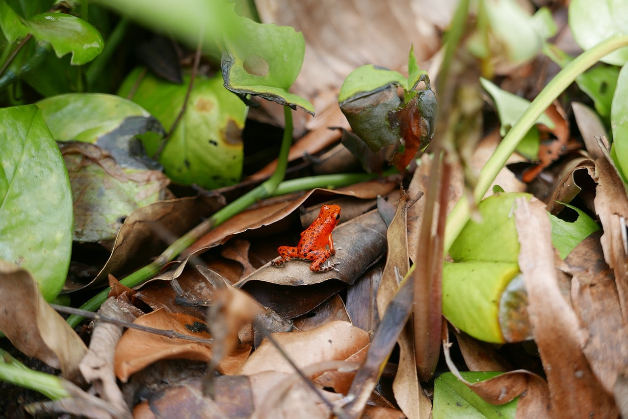 frog-736438_1280