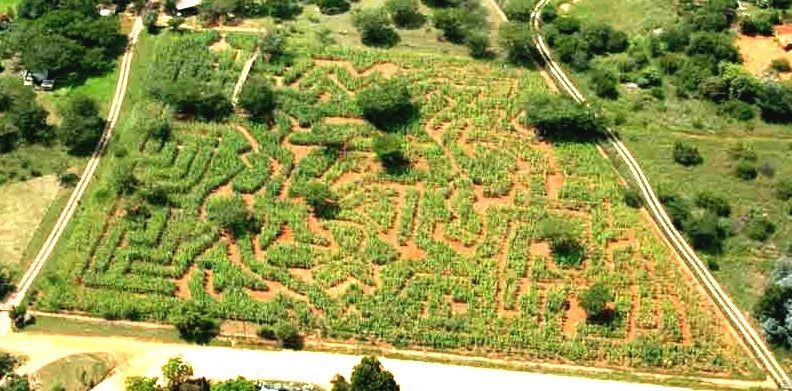 Free-and-Cheap-Date-Ideas-to-Try-in-Johannesburg_Honeydew Maize Maze