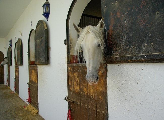 horses-1312569_1920