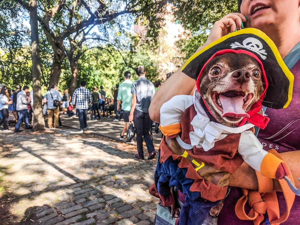 Costumed dogs and very happy people filled Tompkins Square for the Halloween Dog Parade | Amanda Suarez / © Culture Trip