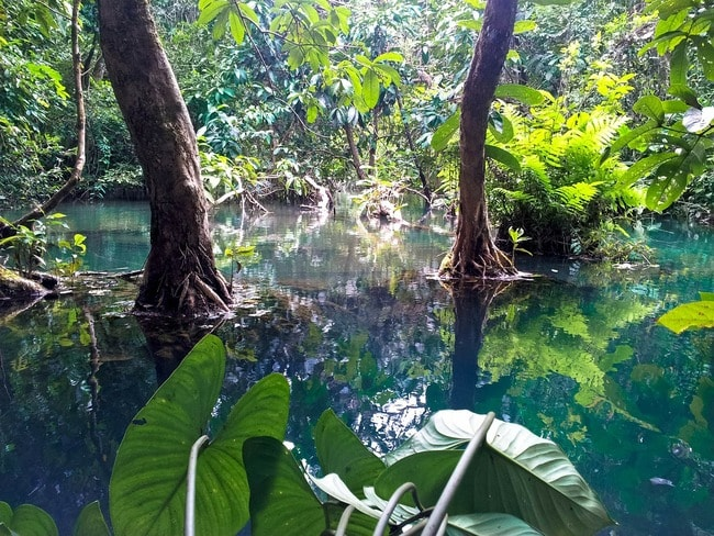21 Photos That Show Laos Has The Most Beautiful Jungles On
