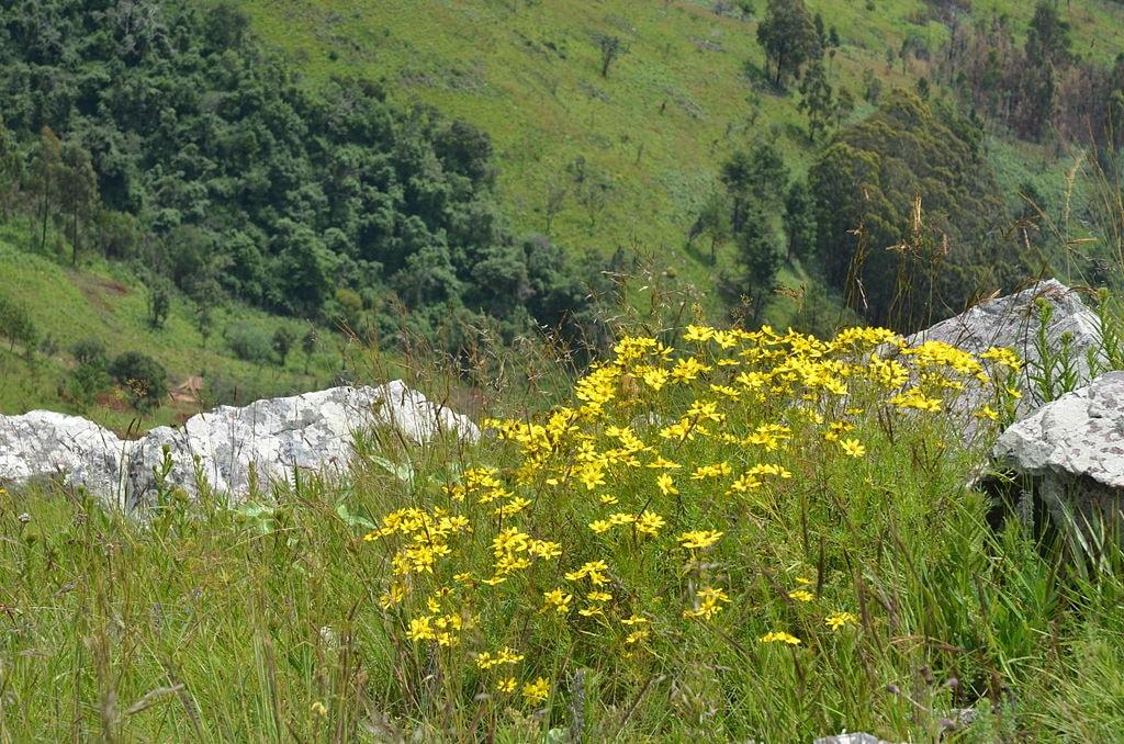 Kitulo Plateau