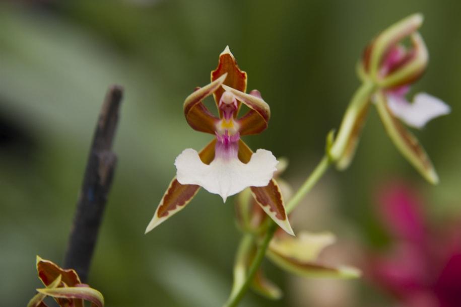 Ecuadorian orchids | © Vibeke Johannessen / Courtesy of The Viking Abroad
