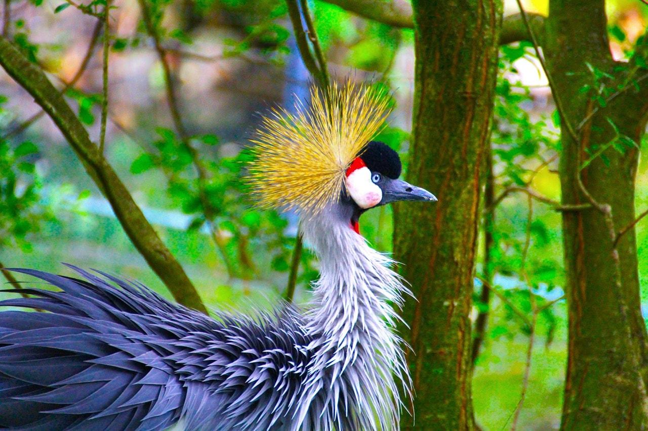 peacock-847489_1280