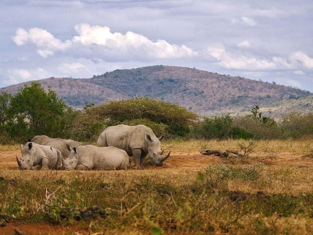 Poaching_rhinos
