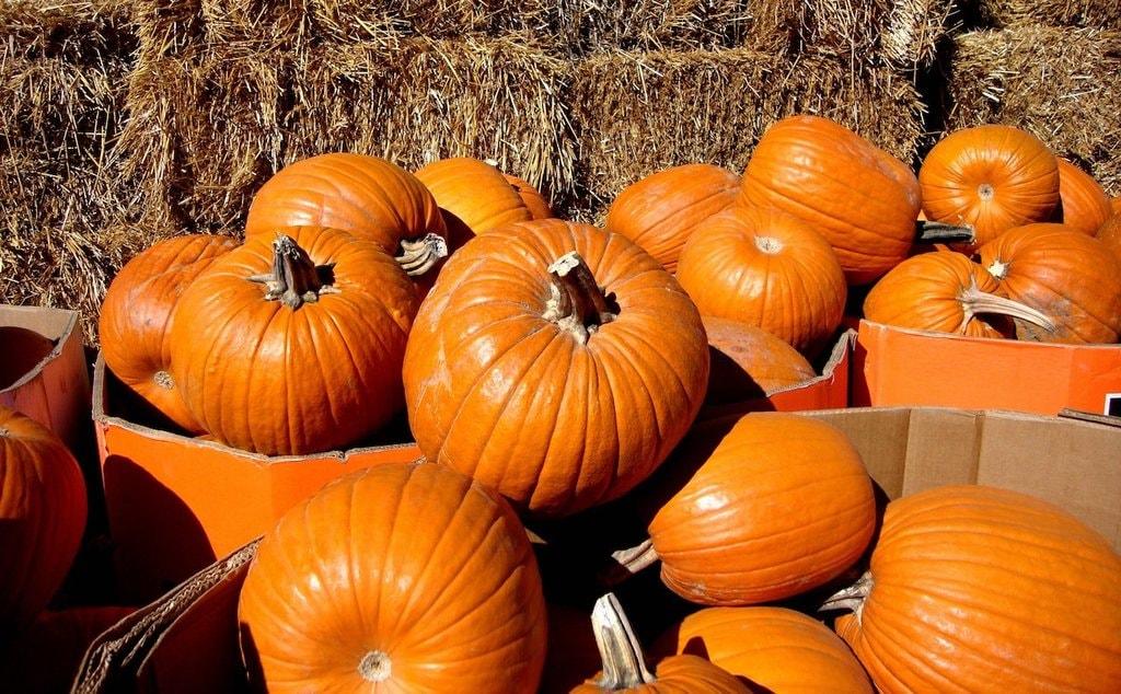 Pumpkins | © VasenkaPhotography/Flickr