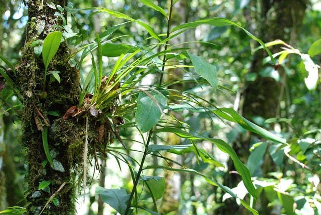 Rainforest in Kinabalu Park
