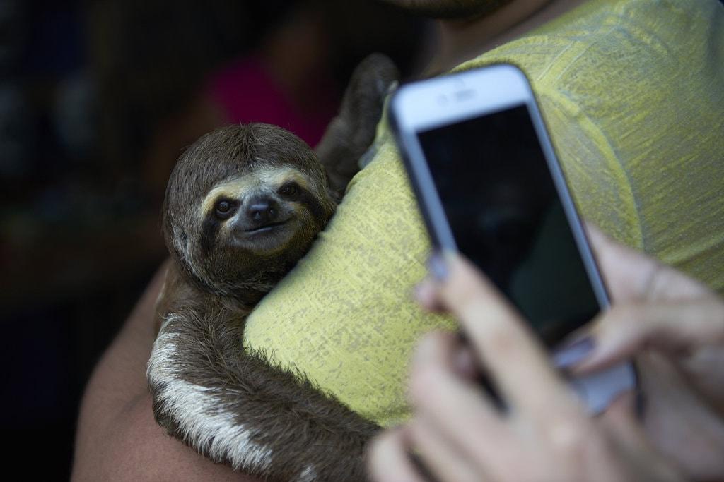 #SlothSelfie |© Nando Machado / World Animal Protection
