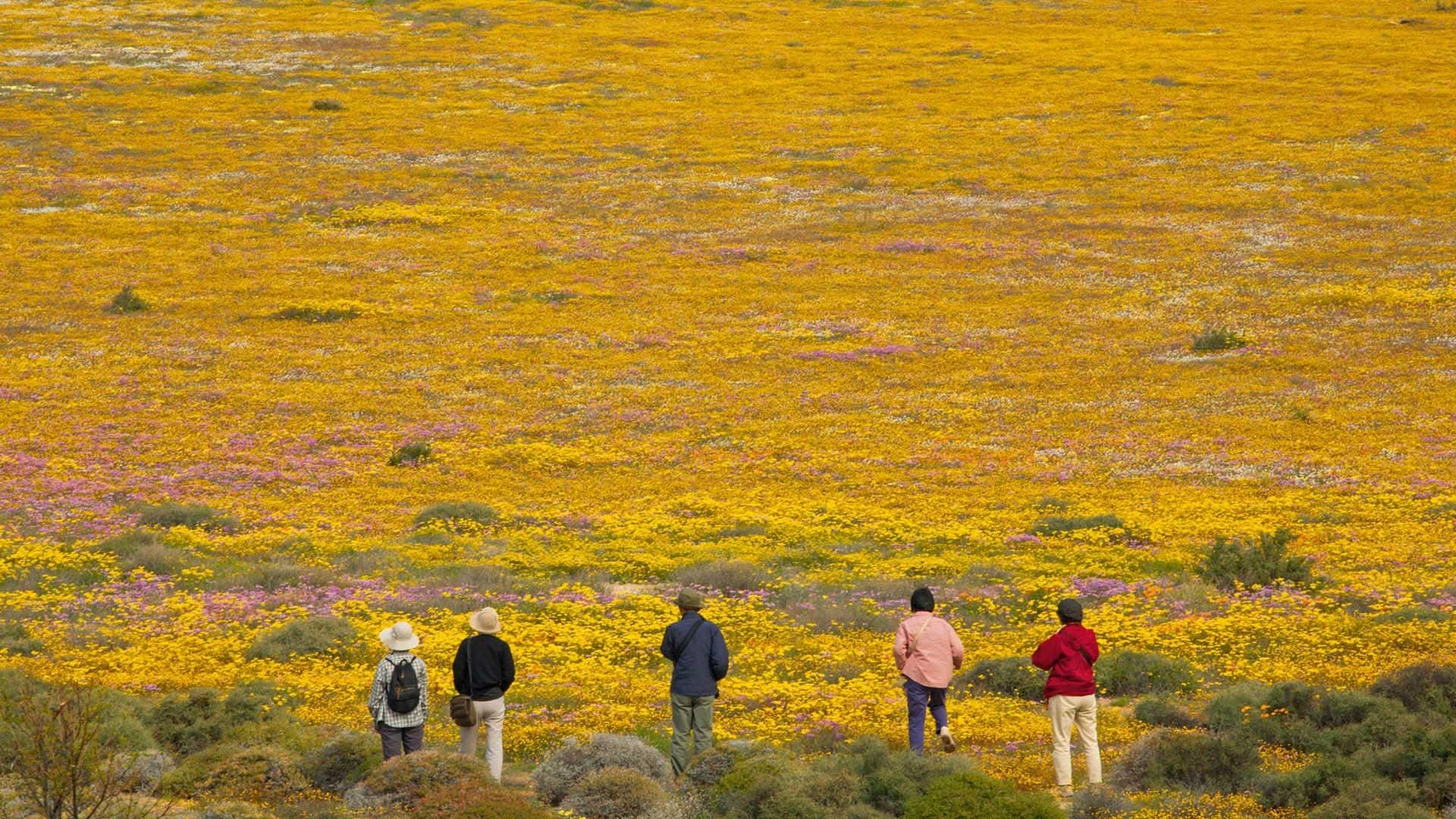 [Image: south-african-national-parks_namaqua.jpg]