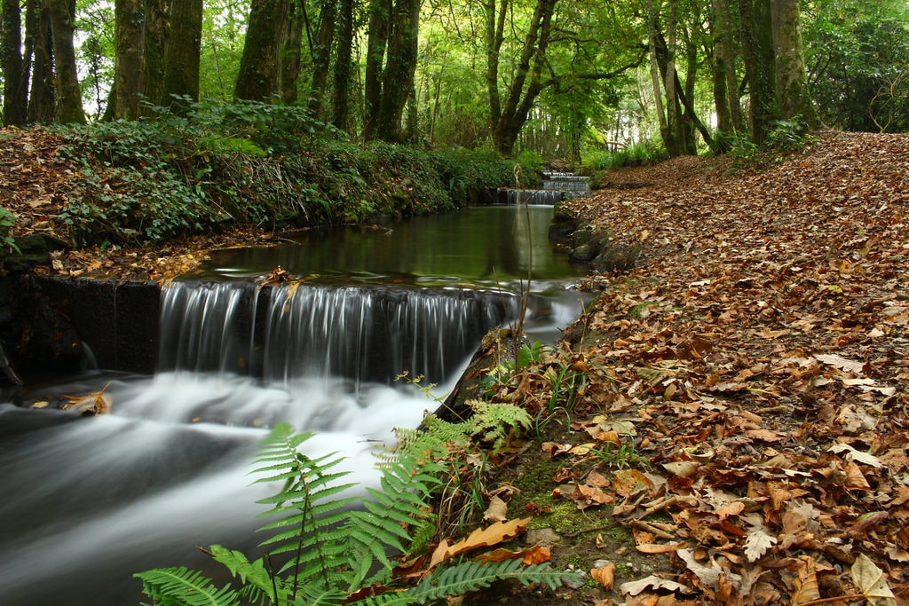 tehidy-woods-mathercreative-flickr