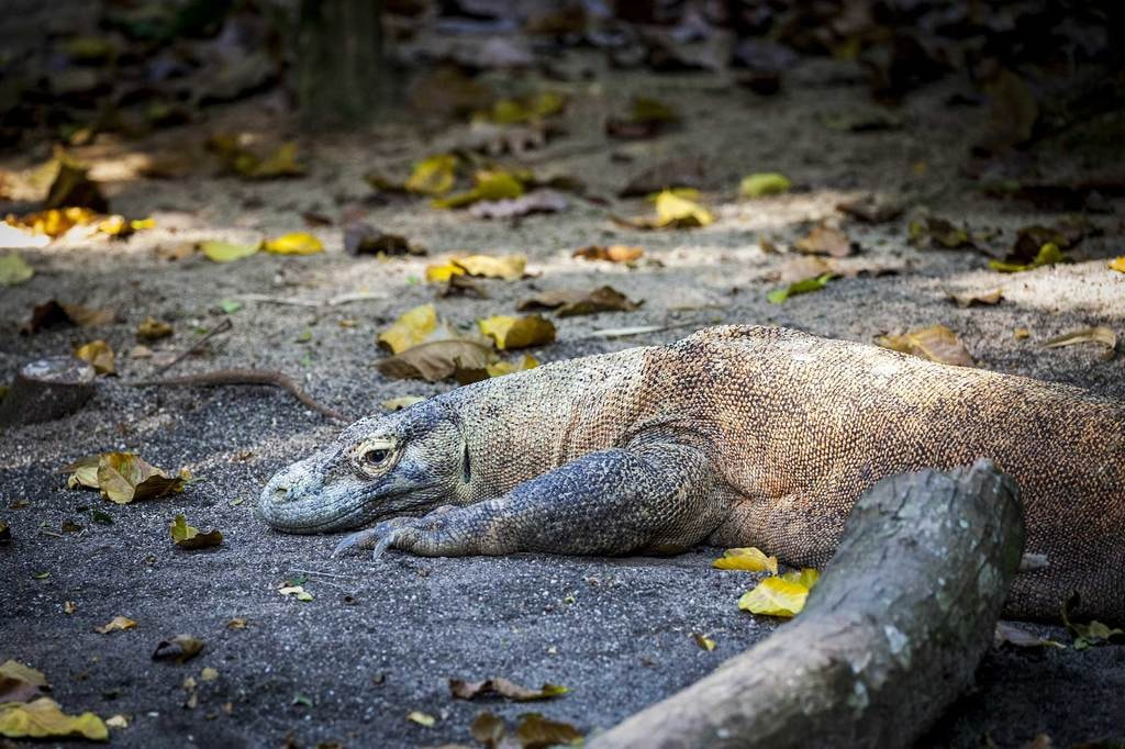 The-Safaris-You-Should-Go-On-that-Aren't-In-Africa_Komodo