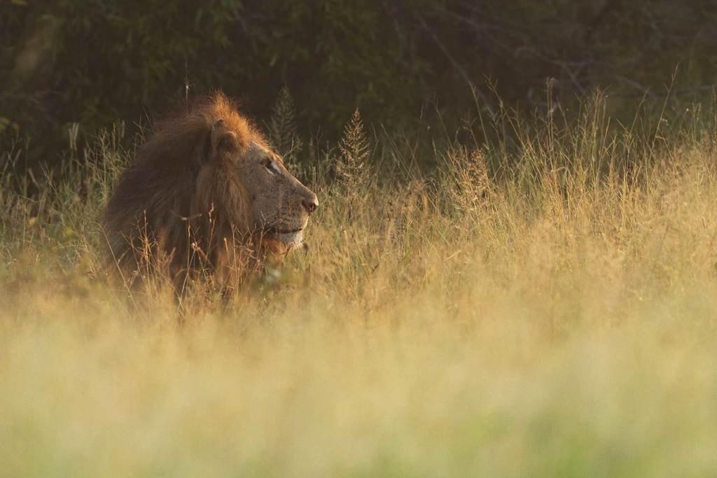 Unusual-date-ideas_Lion-park