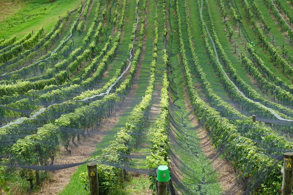wine-1313751_1280