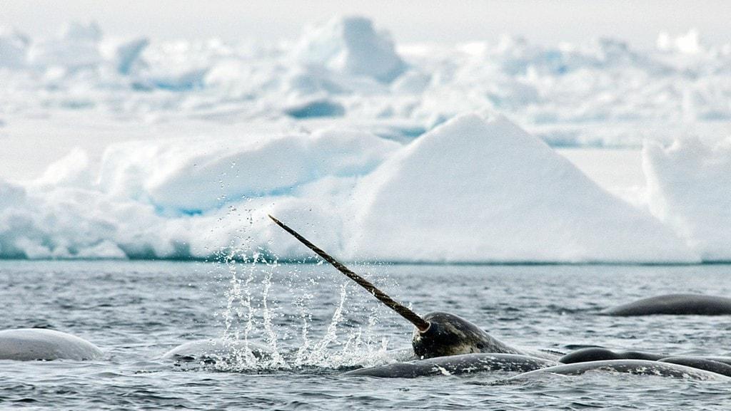 © Arctic Kingdom