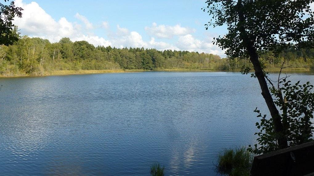 1024px-Judarskogens_naturreservat_2013a