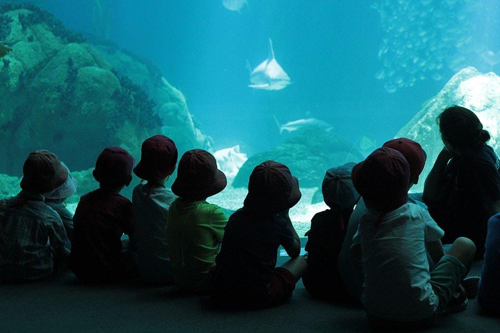 https://commons.wikimedia.org/wiki/File:Lisbon-oceanarium-kids_24108622782_o.jpg