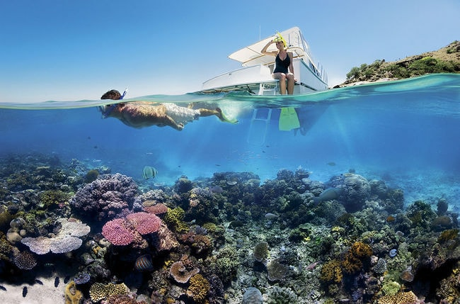 1024px-Reef_Snorkelling_on_the_Great_Barrier_Reef