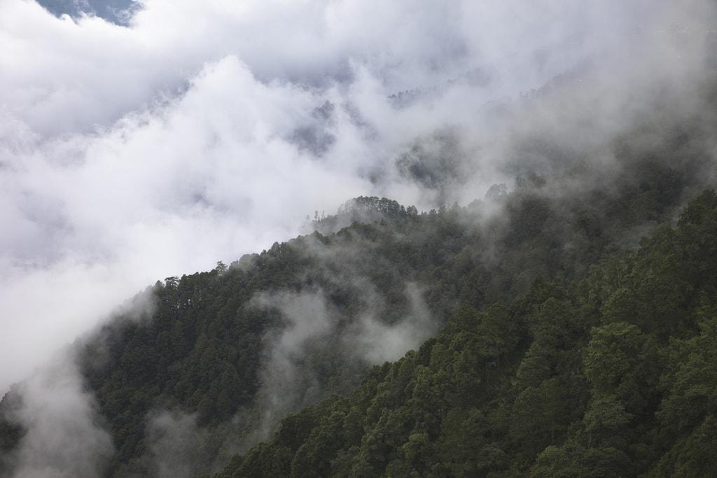 Sierra Juarez, the 'Cloud Forest, Oaxaca, Mexico   © Chris Ford/Flickr