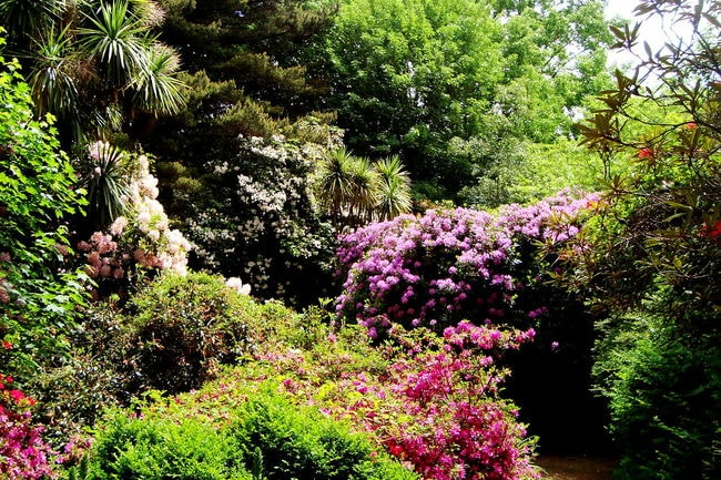 1280px-Botanic_garden_UACh